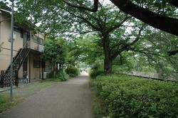 大山路3.JPG