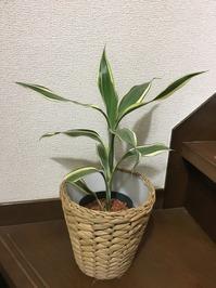 栽培② IMG_6955.JPG