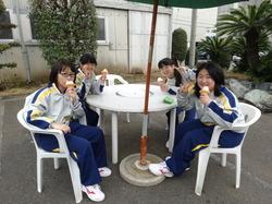 5 芝桜.JPG