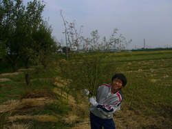 農業09.JPG