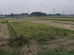 農業13.JPG