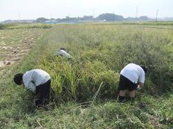農業03.JPG
