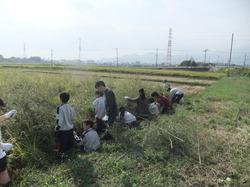 農業04.JPG