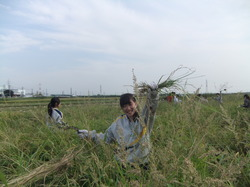 農業10.JPG