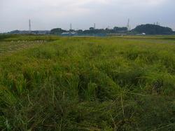 農業12.JPG