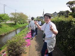 2015芝桜 2.JPG