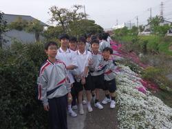 2016芝桜 1.JPG
