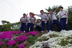 2016芝桜 2.JPG
