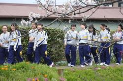 芝桜2017 2.JPG