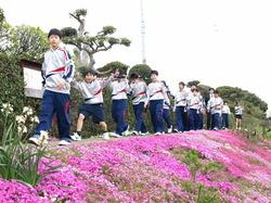 芝桜2017 3.JPG